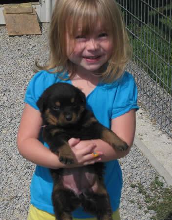 Rottweiler Puppies on Akc Rottweiler Breeder  Rottweiler Puppies For Sale  Rottie Breed